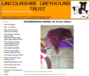 Lincolnshire Greyhound Trust - Timmy